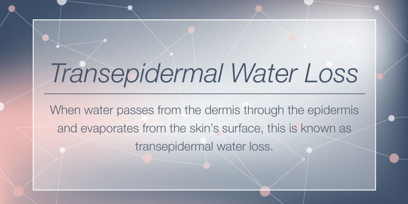 What Is Transepidermal Water Loss?